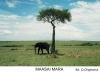 maasai-mara-2